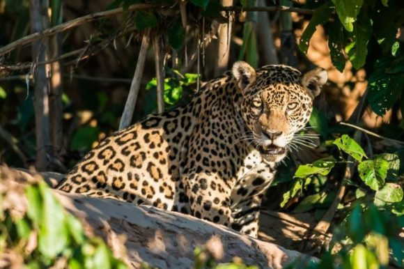 South America Tour: Unveil 14 Days of Amazement in Peru